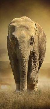 Sticker Frigo Elephant - Stickers Déco Frigo