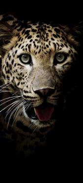 Sticker Frigo Leopard 1 - Stickers Déco Frigo