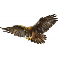 Autocollant Aigle Rapace