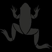 Sticker Grenouille Haut 3