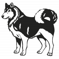 chien husky