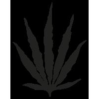 canabis