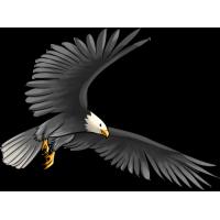 Autocollant Oiseau de Proie 4