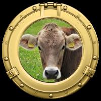 Sticker Hublot Vache