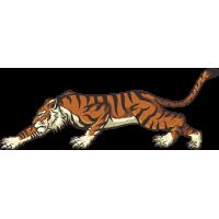 Autocollant Tigre 2
