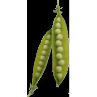Autocollant Fruits et legumes Petit Pois