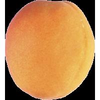 Autocollant Fruits et legumes Abricot