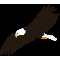Autocollant Aigle En Vol