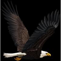 Autocollant Oiseau de Proie 3