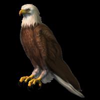 Autocollant Oiseau de Proie Rapace