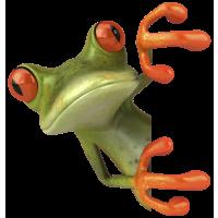 Autocollants grenouilles