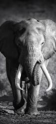 Sticker Porte Elephant 1