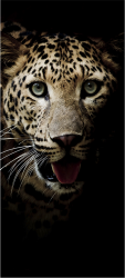 Sticker Porte Leopard 1